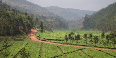 Darwina i Jacek Matuszczak: Muzugu gdzie jest Twój samochód ? Pieszo z Ugandy do Rwandy.
